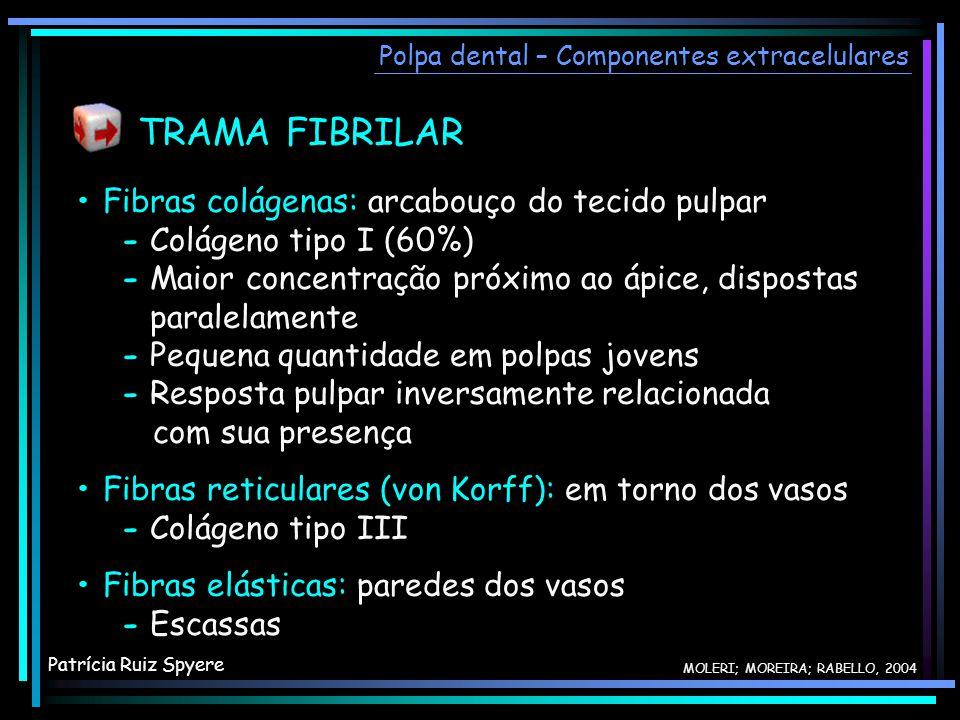 TRAMA FIBRILAR • Fibras colágenas: arcabouço do tecido pulpar