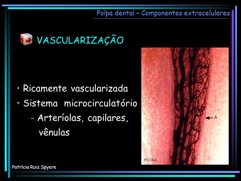 • Ricamente vascularizada • Sistema microcirculatório