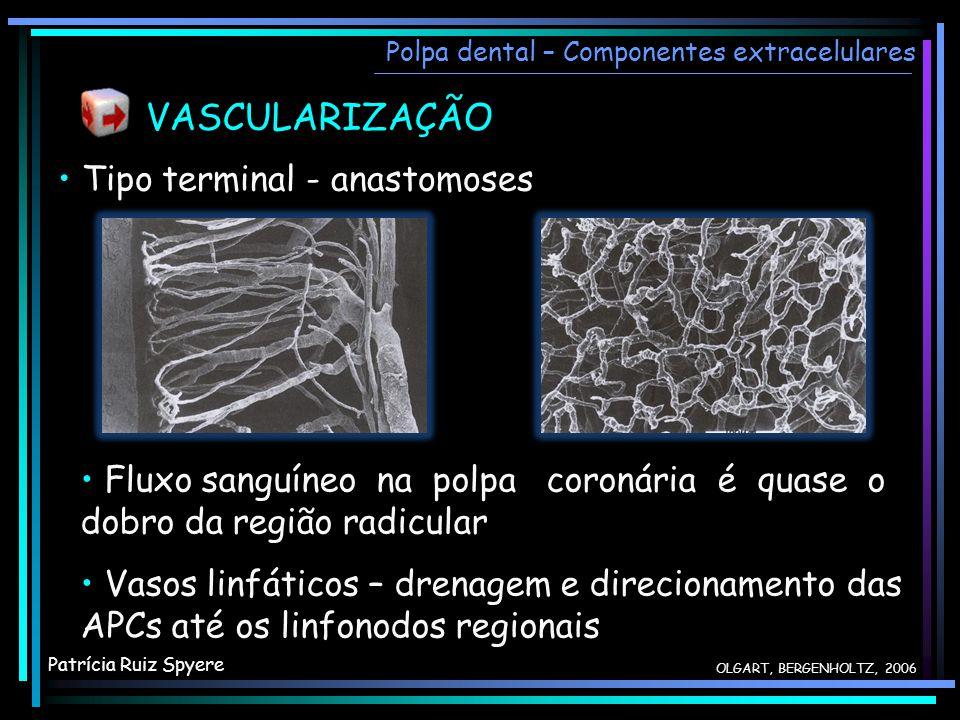 VASCULARIZAÇÃO • Tipo terminal - anastomoses