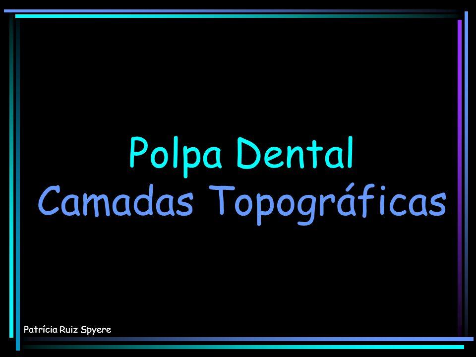 Polpa Dental Camadas Topográficas Patrícia Ruiz Spyere