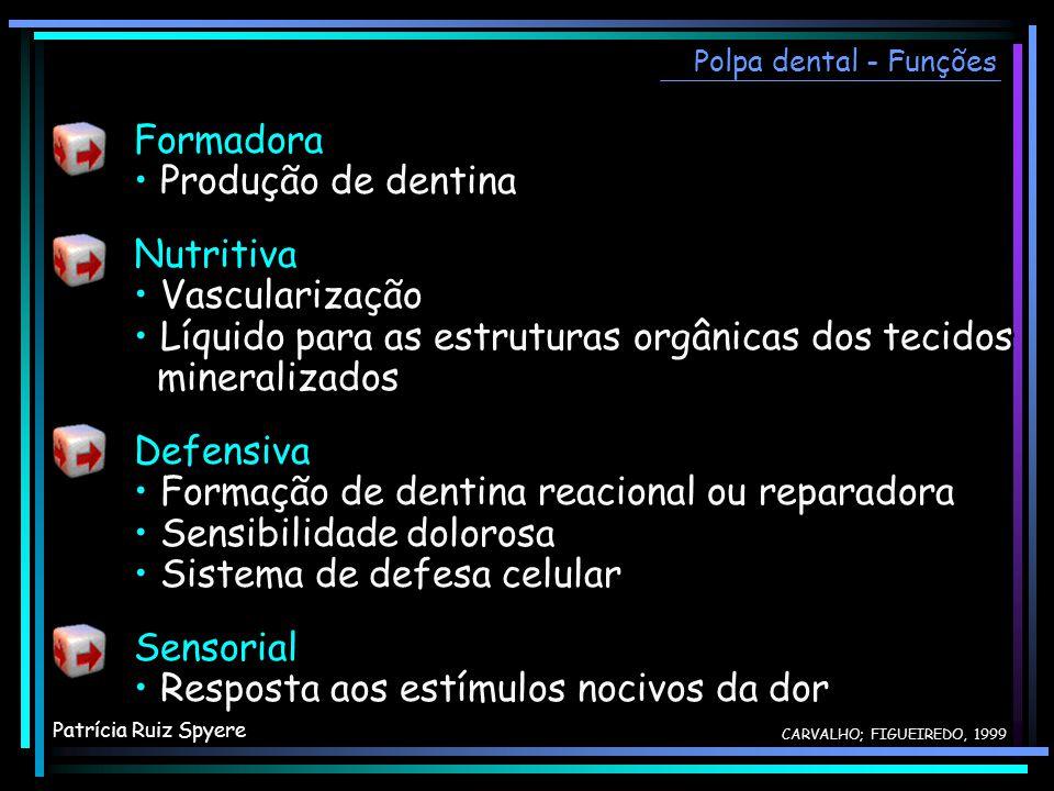 • Líquido para as estruturas orgânicas dos tecidos mineralizados