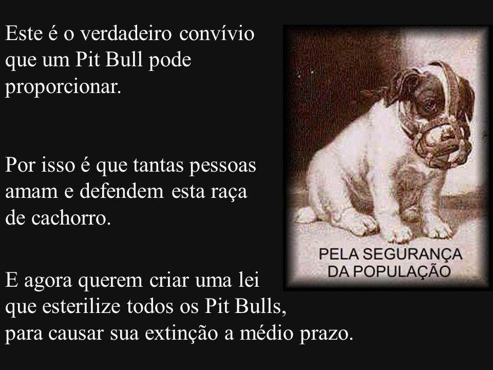 Este é o verdadeiro convívio que um Pit Bull pode proporcionar.