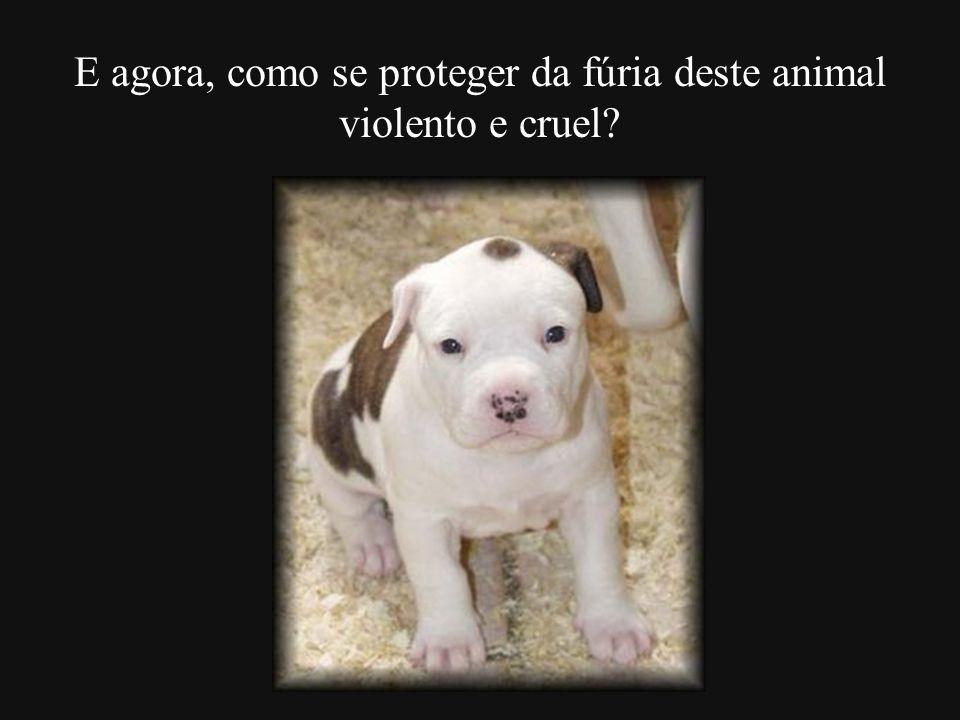 E agora, como se proteger da fúria deste animal violento e cruel