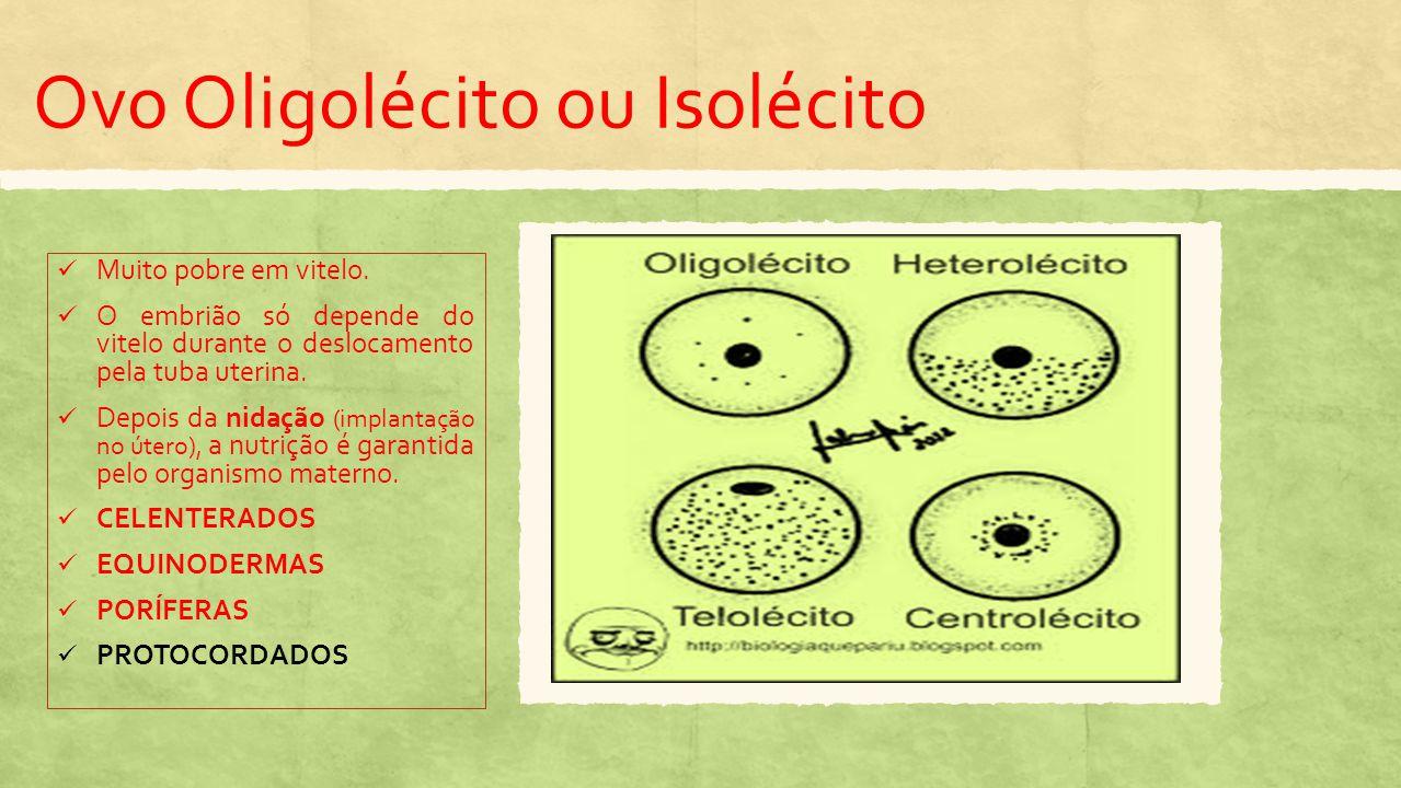 Ovo Oligolécito ou Isolécito