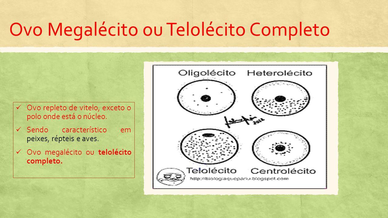 Ovo Megalécito ou Telolécito Completo