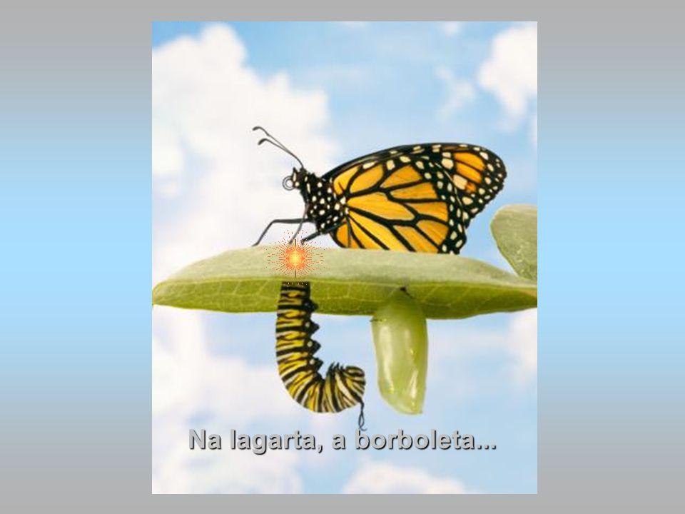 Na lagarta, a borboleta...