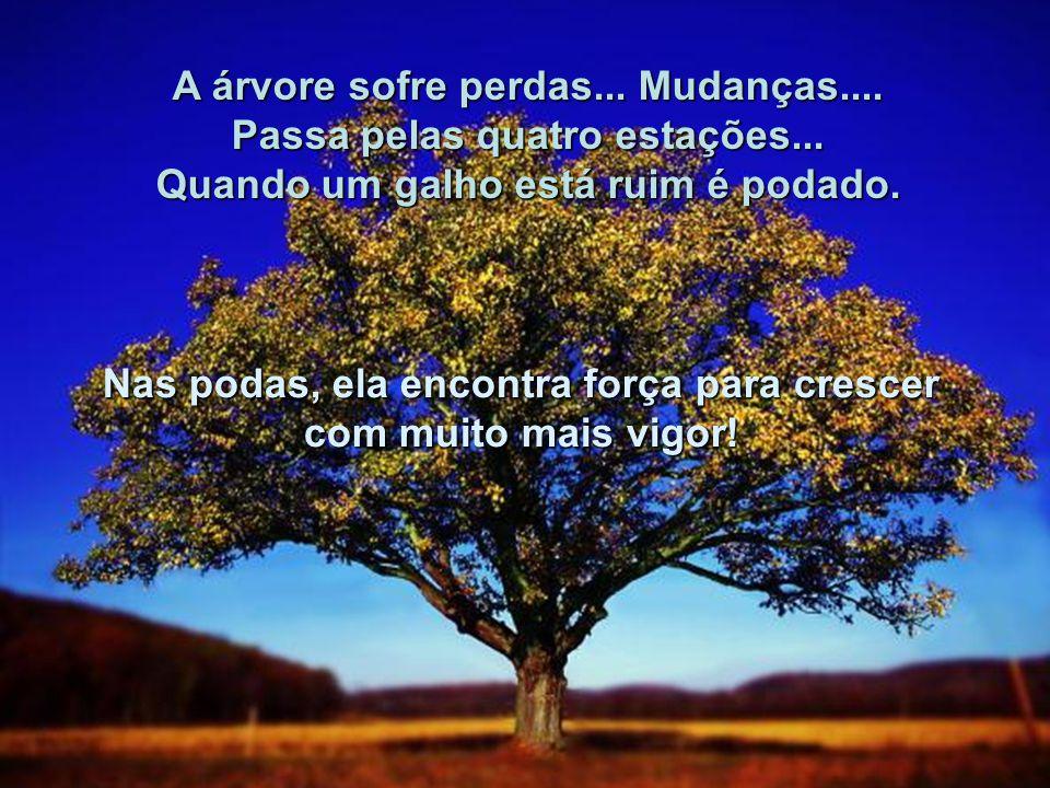 A árvore sofre perdas... Mudanças.... Passa pelas quatro estações...