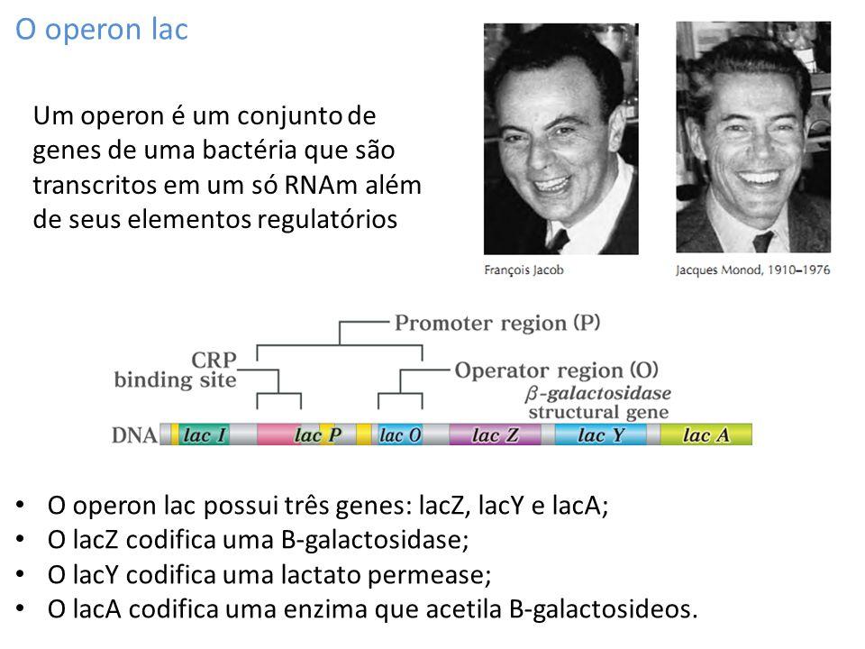 O operon lac Um operon é um conjunto de genes de uma bactéria que são transcritos em um só RNAm além de seus elementos regulatórios.