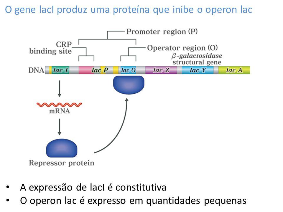 O gene lacI produz uma proteína que inibe o operon lac