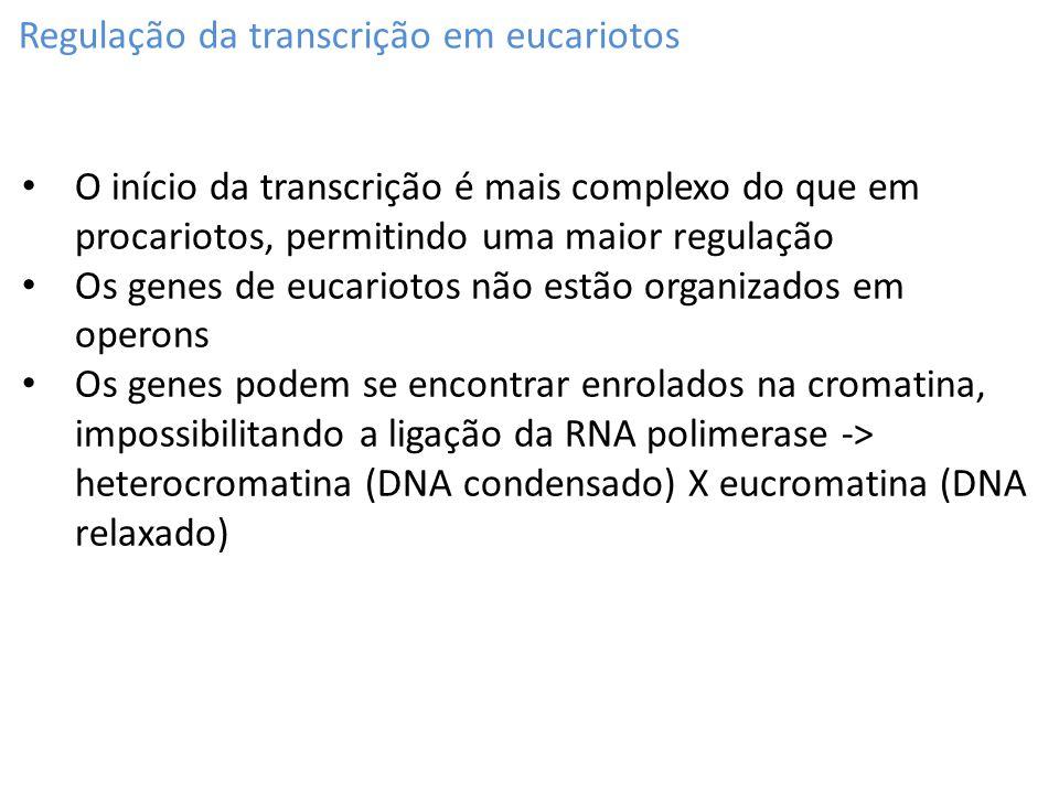 Regulação da transcrição em eucariotos