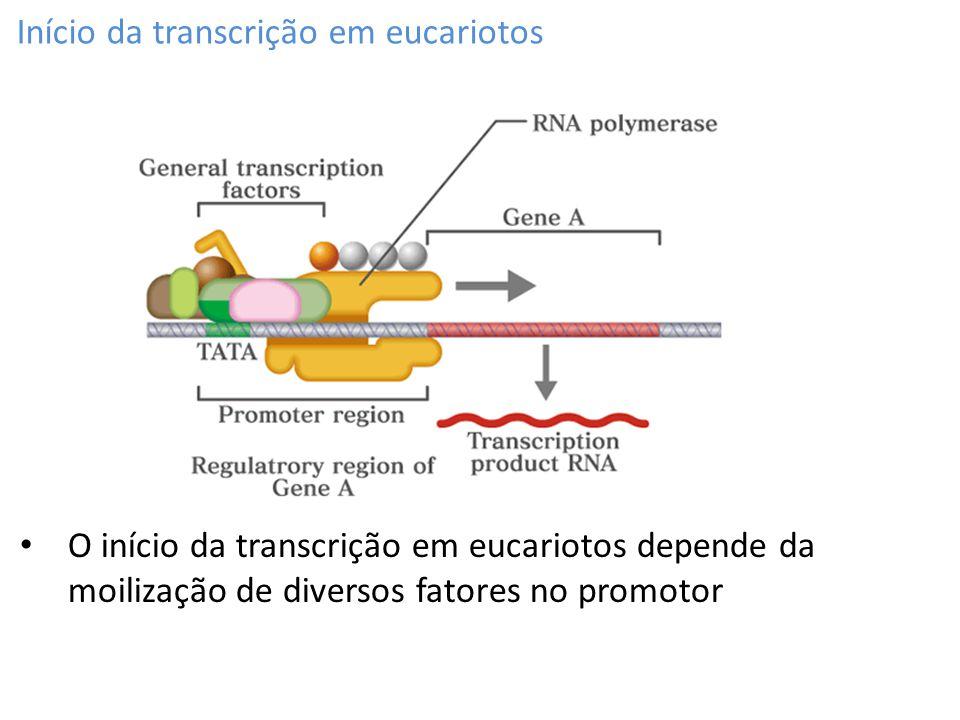 Início da transcrição em eucariotos