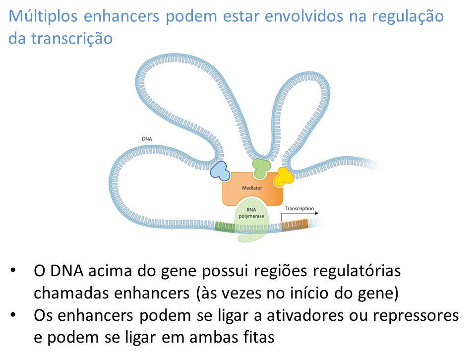 Múltiplos enhancers podem estar envolvidos na regulação da transcrição
