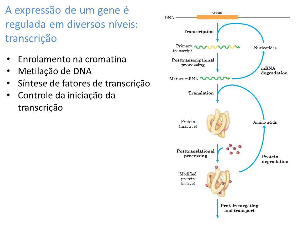 A expressão de um gene é regulada em diversos níveis: transcrição