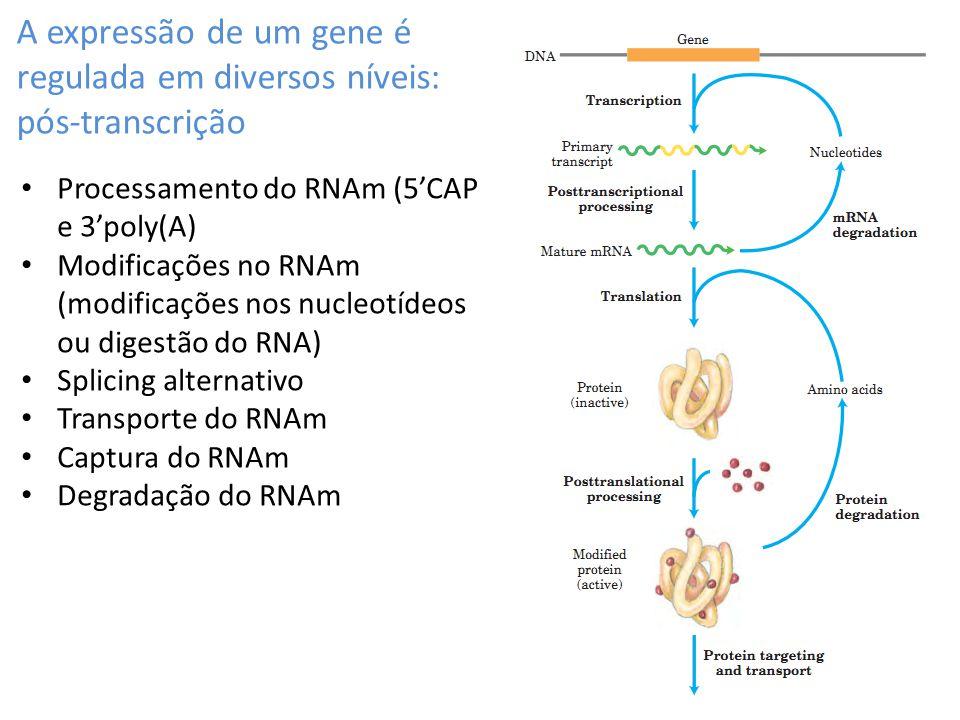 A expressão de um gene é regulada em diversos níveis: pós-transcrição