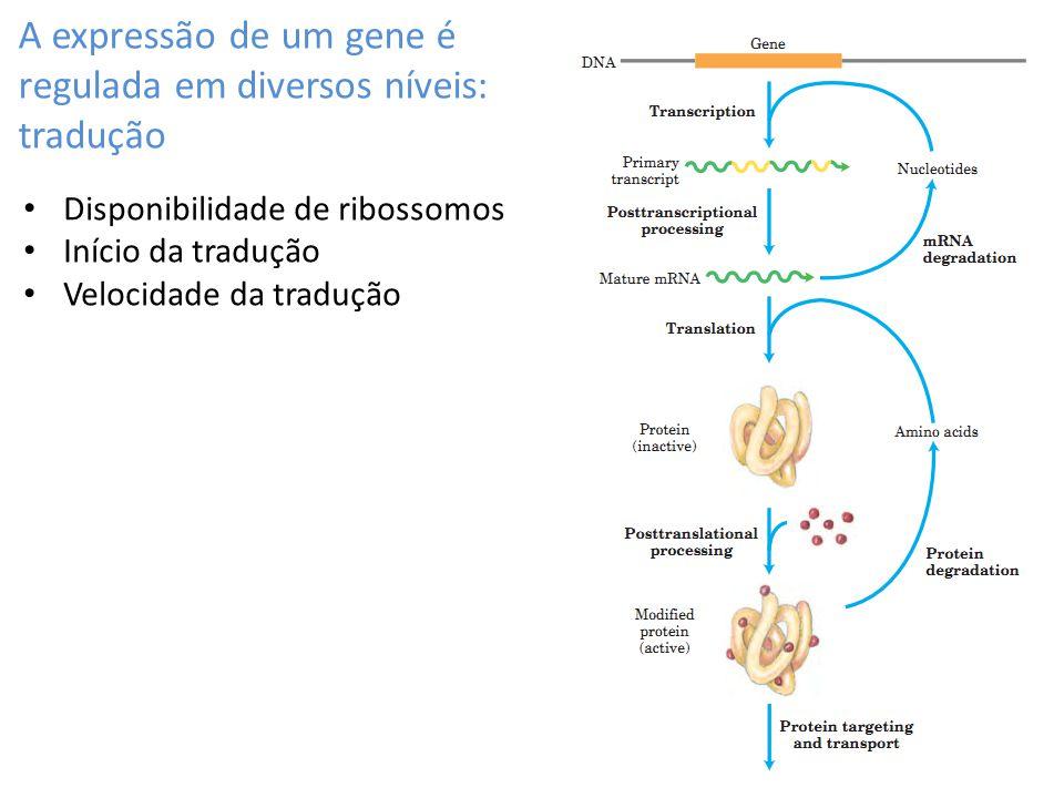 A expressão de um gene é regulada em diversos níveis: tradução