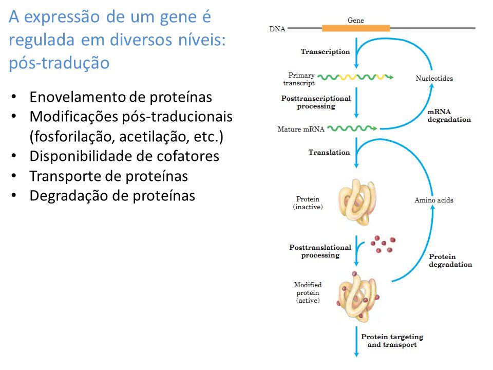 A expressão de um gene é regulada em diversos níveis: pós-tradução
