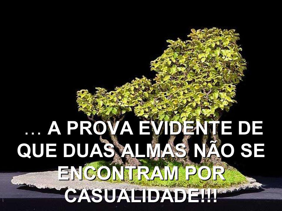 … A PROVA EVIDENTE DE QUE DUAS ALMAS NÃO SE ENCONTRAM POR CASUALIDADE!!!