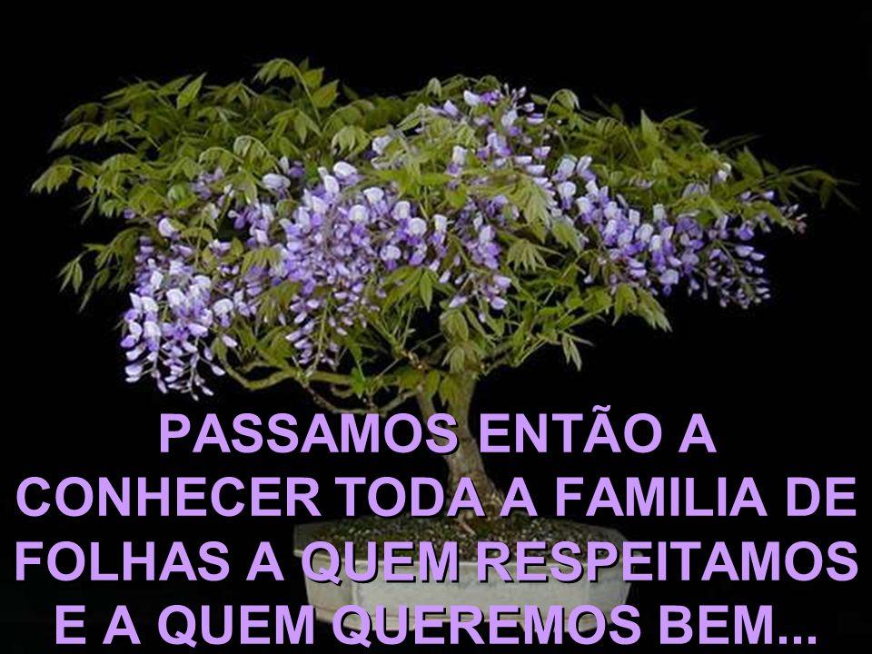 PASSAMOS ENTÃO A CONHECER TODA A FAMILIA DE FOLHAS A QUEM RESPEITAMOS E A QUEM QUEREMOS BEM...