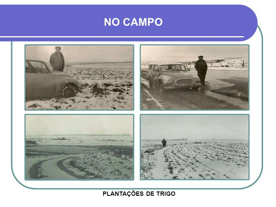 NO CAMPO PLANTAÇÕES DE TRIGO