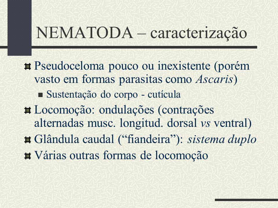 NEMATODA – caracterização