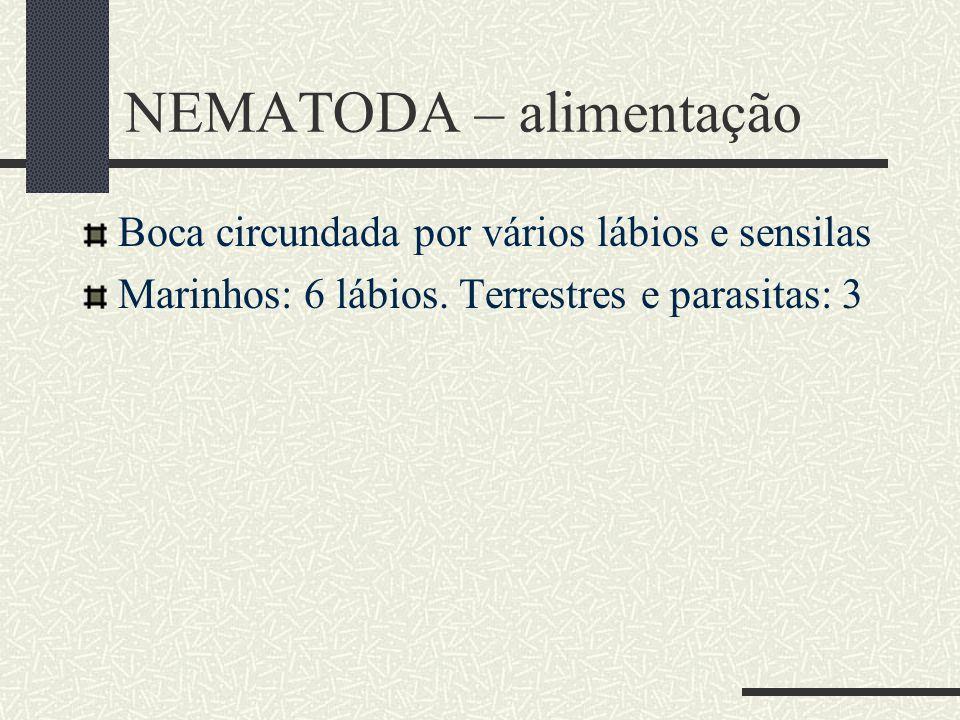 NEMATODA – alimentação