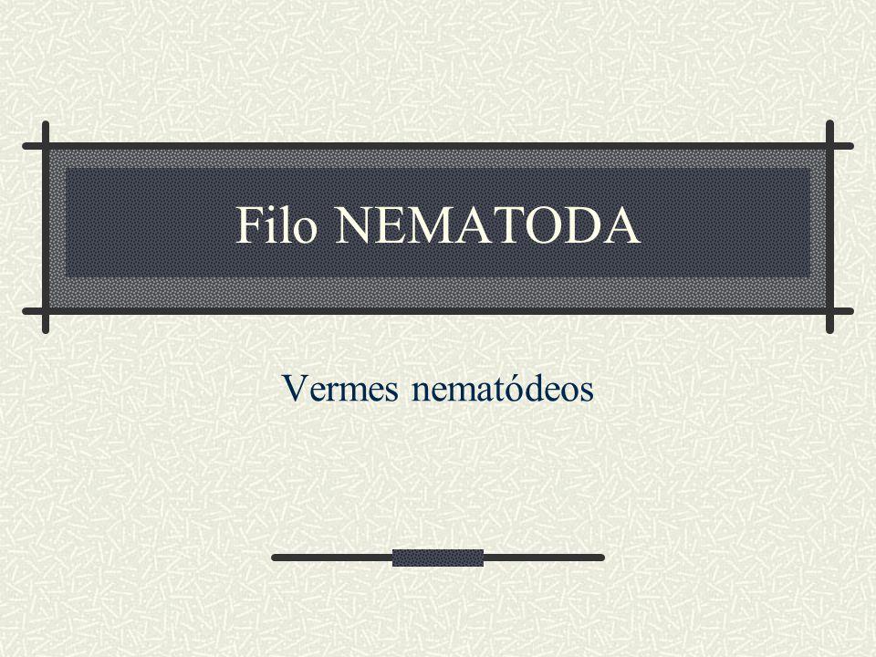 Filo NEMATODA Vermes nematódeos