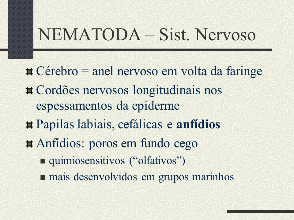 NEMATODA – Sist. Nervoso