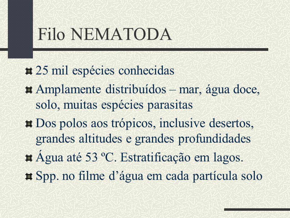 Filo NEMATODA 25 mil espécies conhecidas