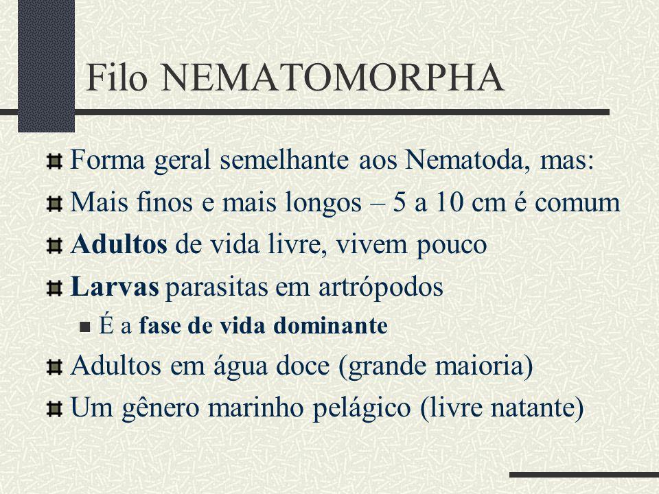Filo NEMATOMORPHA Forma geral semelhante aos Nematoda, mas: