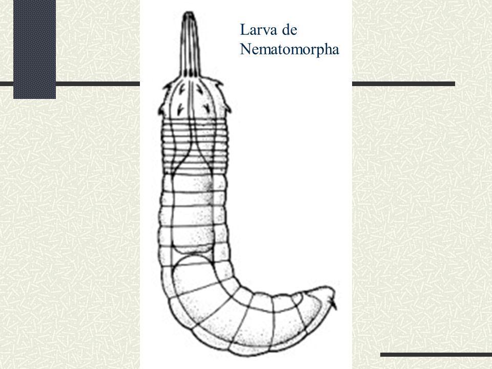 Larva de Nematomorpha