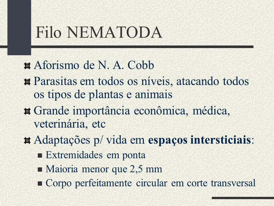 Filo NEMATODA Aforismo de N. A. Cobb