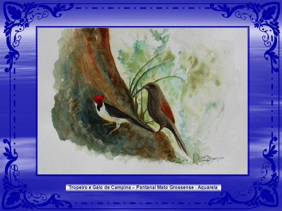 Tropeiro e Galo de Campina – Pantanal Mato Grossense - Aquarela