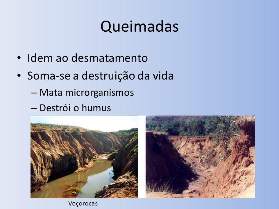 Queimadas Idem ao desmatamento Soma-se a destruição da vida