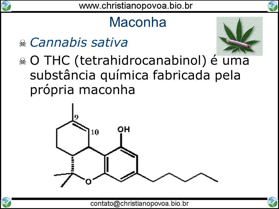 Maconha Cannabis sativa