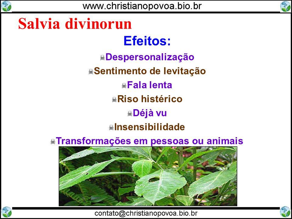 Sentimento de levitação Transformações em pessoas ou animais