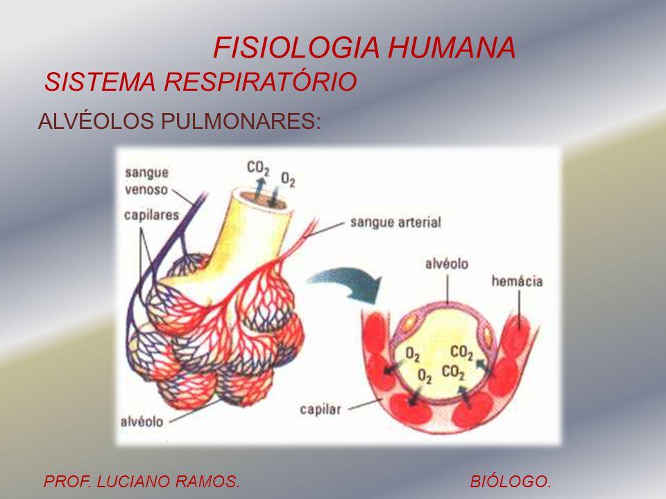 ALVÉOLOS PULMONARES: