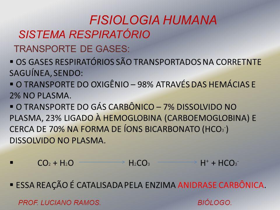 TRANSPORTE DE GASES: OS GASES RESPIRATÓRIOS SÃO TRANSPORTADOS NA CORRETNTE SAGUÍNEA, SENDO: