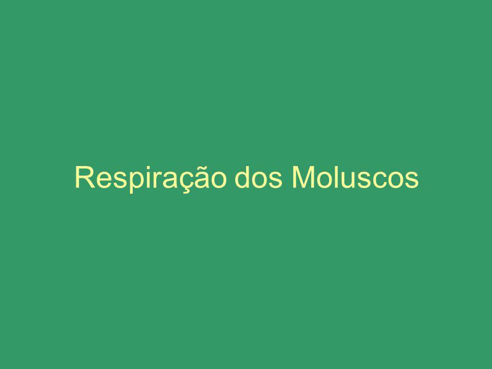 Respiração dos Moluscos