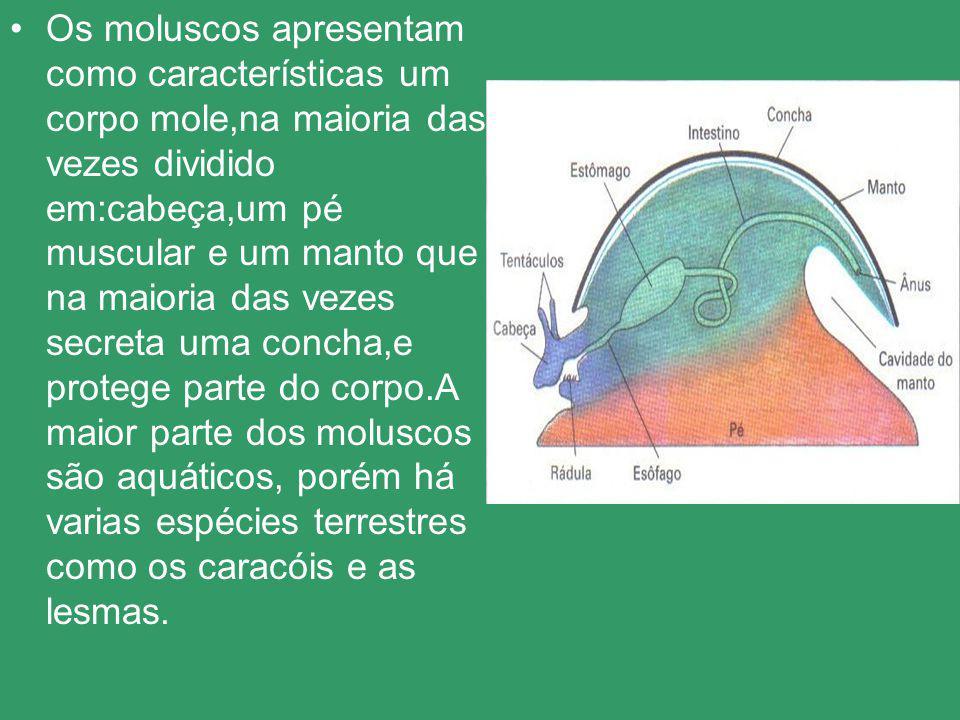 Os moluscos apresentam como características um corpo mole,na maioria das vezes dividido em:cabeça,um pé muscular e um manto que na maioria das vezes secreta uma concha,e protege parte do corpo.A maior parte dos moluscos são aquáticos, porém há varias espécies terrestres como os caracóis e as lesmas.