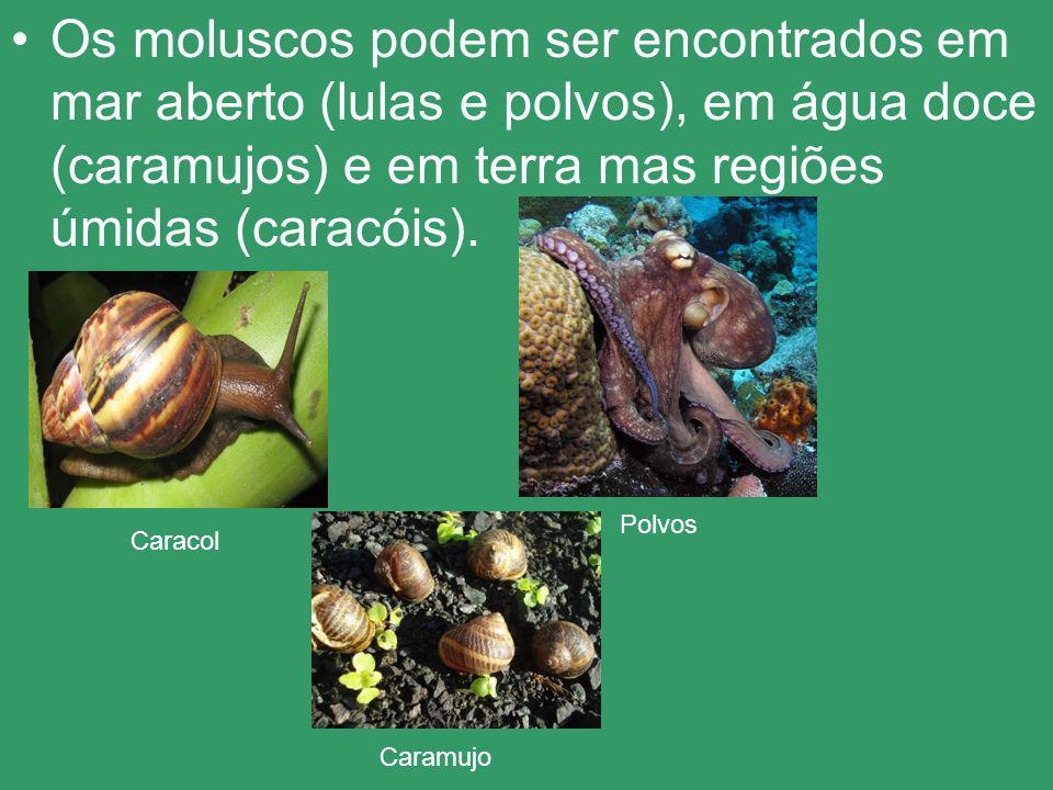 Os moluscos podem ser encontrados em mar aberto (lulas e polvos), em água doce (caramujos) e em terra mas regiões úmidas (caracóis).