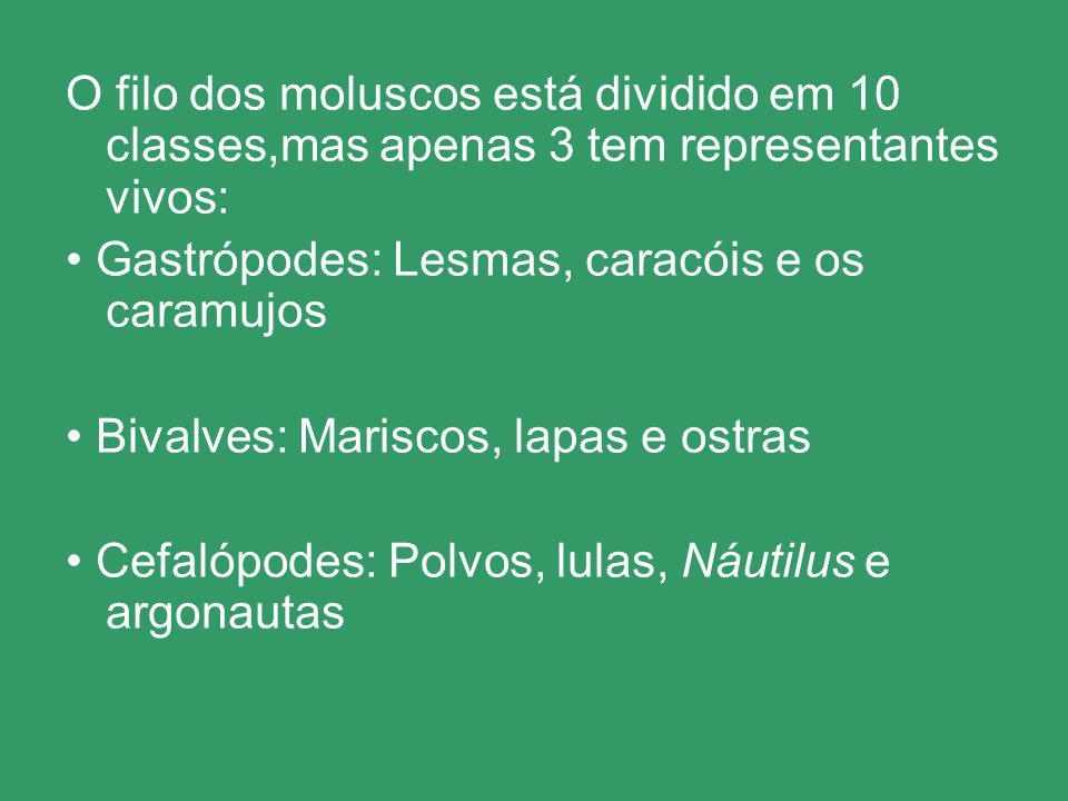 O filo dos moluscos está dividido em 10 classes,mas apenas 3 tem representantes vivos: