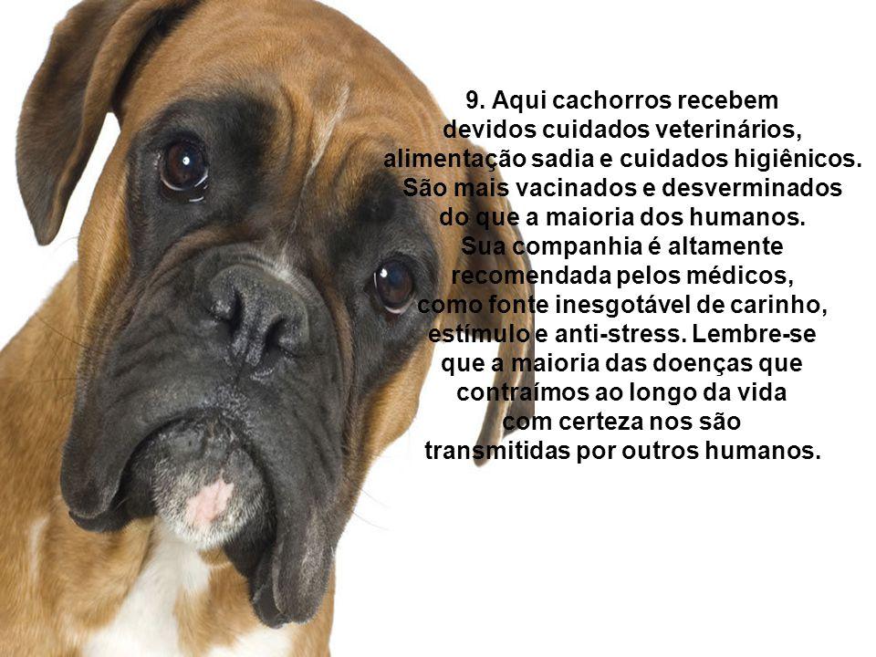 9. Aqui cachorros recebem devidos cuidados veterinários,