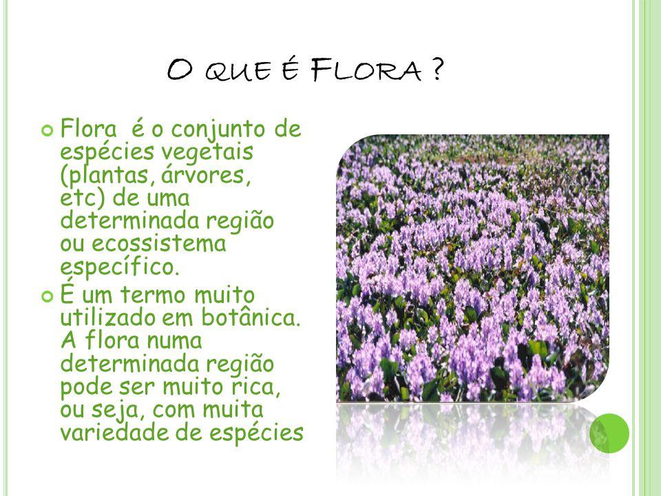 O que é Flora Flora é o conjunto de espécies vegetais (plantas, árvores, etc) de uma determinada região ou ecossistema específico.