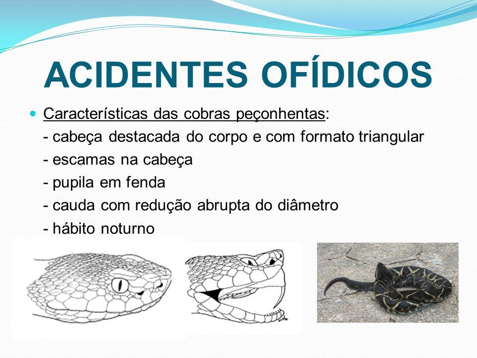 ACIDENTES OFÍDICOS Características das cobras peçonhentas: