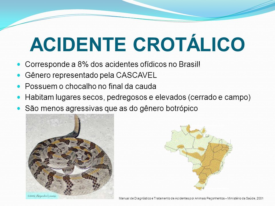 ACIDENTE CROTÁLICO Corresponde a 8% dos acidentes ofídicos no Brasil!