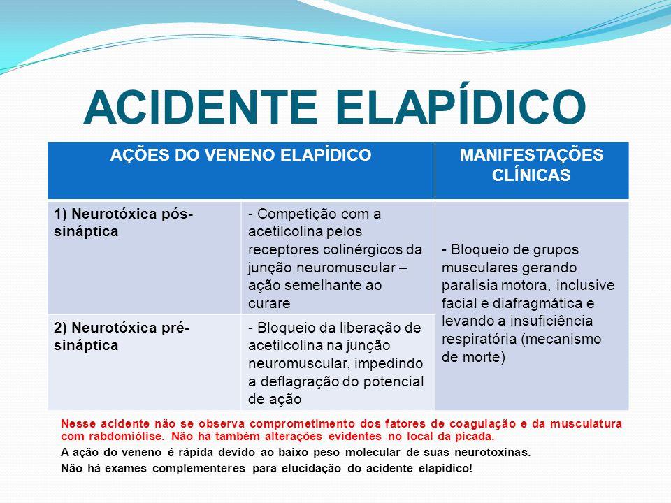 AÇÕES DO VENENO ELAPÍDICO MANIFESTAÇÕES CLÍNICAS