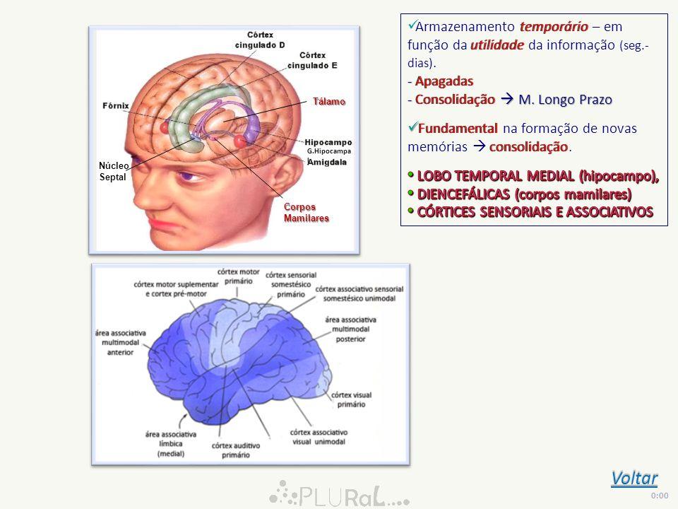 Armazenamento temporário – em função da utilidade da informação (seg