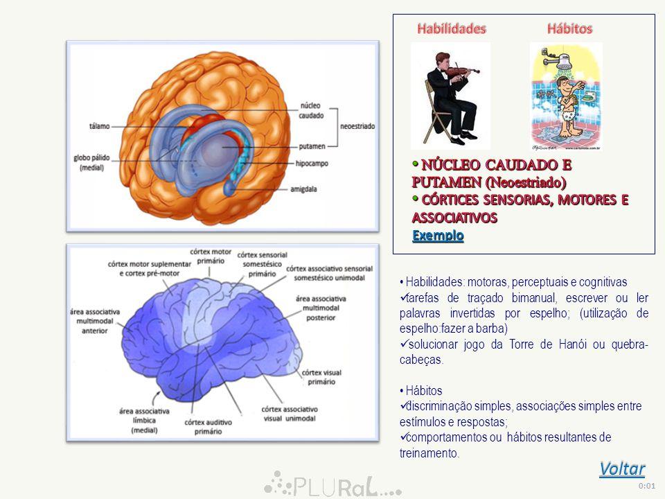 Voltar Habilidades Hábitos NÚCLEO CAUDADO E PUTAMEN (Neoestriado)