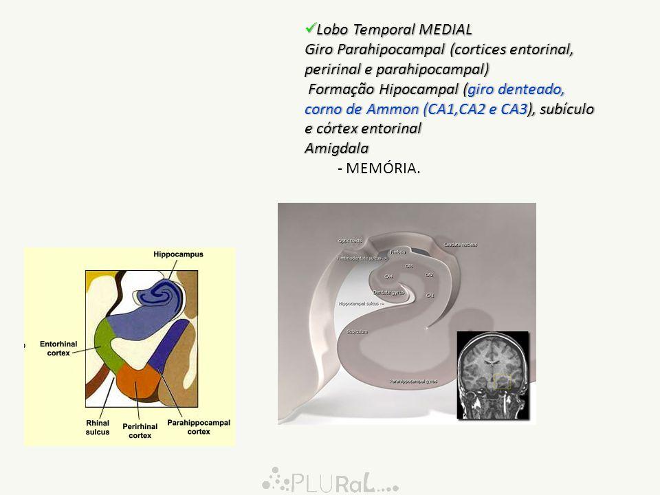 Giro Parahipocampal (cortices entorinal, peririnal e parahipocampal)