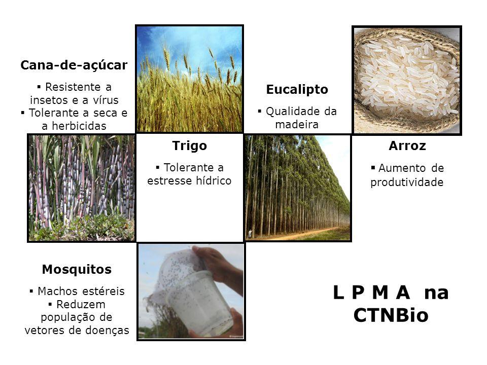 L P M A na CTNBio Cana-de-açúcar Eucalipto Trigo Arroz
